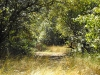 sunny_woods