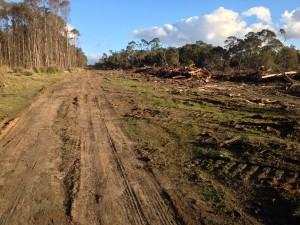 The Tasmanian timber industry is still alive and well