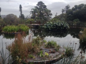 Melbourne Botanical Gardens, floating water purification